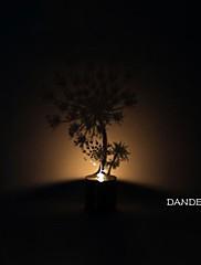タンポポの影の投影常夜灯創造的主導のベッドサイドランプ
