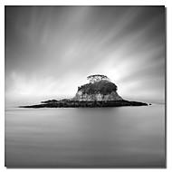 Stampato su tela Rat Island di Moises Levy con Strethed telaio