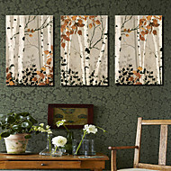 Stretched Canvas Art Botanical Maple Tree Set of 3