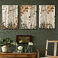 Reproducción en lienzo de arte botánico Maple Tree Set de 3
