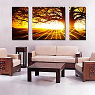 tela set di 3 paesaggio grande albero nel tramonto Stampa trasferimenti su tela pronto da appendere