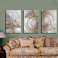 Sträckt Canvastryck Art Stilleben White Conch Set om 3