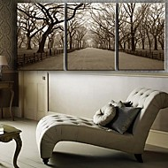 Stretched Canvas Art Landscape The Central Park Set of 3