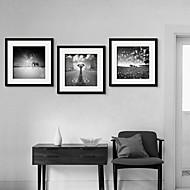 Zvířecí motivy Oprawione płótno / Zestaw w oprawie Wall Art,PVC (polichlorek winylu) Czarny Zawiera podkładkę z ramą Wall Art