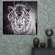 e-Home® sträckta canvas konst tiger dekorativt måleri uppsättning av 3