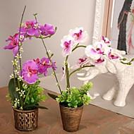 "9.8 ""l 11.8"" h phalaenopsis vintage no pote plástico rattan bronze"