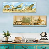 E-home® 2 tuval sanat kuşlar ve deniz kabukları dekoratif boyama seti gergin