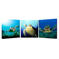 Lovely Turtle Animal Canvas Wall Art Stretched Canvas Print Three Panels High Quality Canvas Ready to Hang