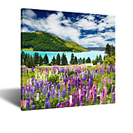 VISUAL STAR®Square Purple Lavender Fields Scenery Canvas Wall Art Reay to Hang