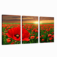 VISUAL STAR®Flower Garden Stretched Canvas Print Sunrise Photo Digital Printing Group Wall Art Ready to Hang