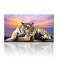 Zvíře / Krajina / Fotografie / Moderní / Cestování Na plátně Jeden panel Připraveno k Pověste , Horizontální