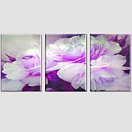 Botanický motiv / Moderní / Pop Art Na plátně Tři panely Připraveno k Pověste , Horizontální