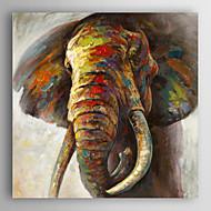 Peint à la main Animal Peintures à l'huile,Modern Un Panneau Toile Peinture à l'huile Hang-peint For Décoration d'intérieur