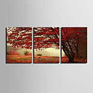 E-HOME Stretched Canvas Art Red Maple Tree Decoration Painting  Set Of 3