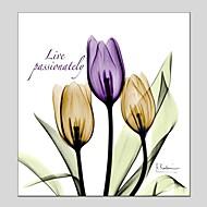 Kézzel festett Virágos / Botanikus Négyzet,Modern Klasszikus Egy elem Vászon Hang festett olajfestmény For lakberendezési