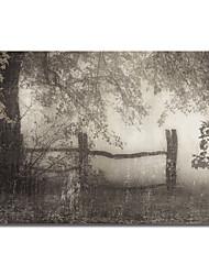 stampato quadri su tela paesaggio morbido io di Pela + Silverman con telaio allungato