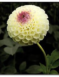 Stampato su tela floreale di Harold Silverman - Fiori con telaio in tensione
