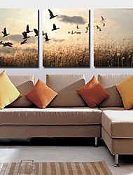 Stretched Canvas Art Landscape Farmland Set of 3