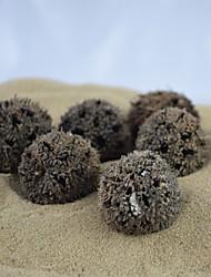 Paisagem Decoração ecológica pequenas bagas para Formigas