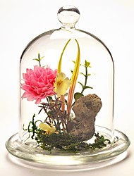 Table Centerpieces DIY Terrarium/Glass Cupcake Cover   Table Deocrations (Plants Not Included)