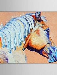 Hand Painted Oil Painting Animals The Horsehead Close-up with Stretched Frame