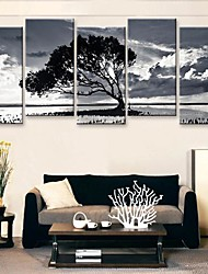 Stretched Canvas Art Black And White of The Shadow of The Tree Set of 5