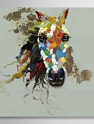 peints à la main peinture à l'huile animale cheval coloré avec cadre étiré
