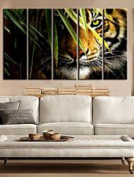 Stretched Canvas Art Landscape Animal king of Forest Set of 5