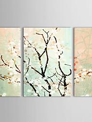 Hand geschilderd olieverf Bloemen Samuume met gestrekte frame set van 3