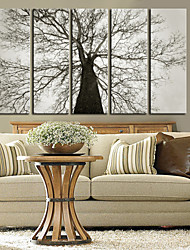 Canvas Art Botânico Old Tree conjunto de 5