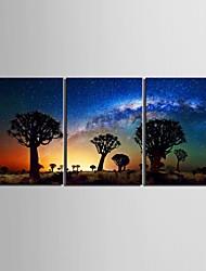 натянутым холстом искусство пустыни в тени дерева Набор из 3