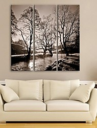 E-HOME® Stretched Canvas Art Rivers And Trees Decorative Painting  Set of 3