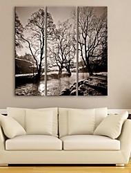 e-home® lona esticada rios de arte e árvores set pintura decorativa, de 3 de