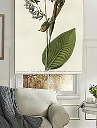 oro-coronado persiana reyezuelo