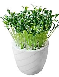 plástico pequeno vaso de plantas brotam