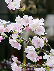 emulational sakura quatro ramos