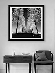 e-FOYER toile encadrée art, arbre soignée toile encadrée impression