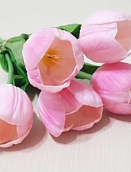 5 Tulip Blumen