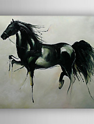 Oil Painting Horse Hand Painted Canvas with Stretched Framed Ready to Hang