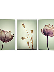 VISUAL STAR®Modern Flower Canvas Printing Art Beautiful Simple Design Wall Painting Ready to Hang