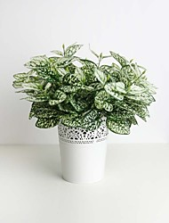 "11.8"" Six Branches Green&White Hypoestes phyllostachya Artificial Plant for Decoration and Plant Wall"