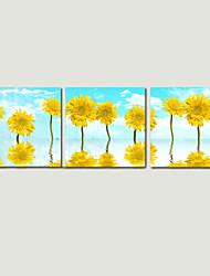 stampa star®flower foto visivo su tela muro opere d'arte floreali pronta per essere appesa