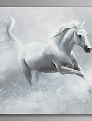 White Horse Wall Art Canvas Print Ready To Hang