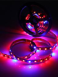36W Luces LED para Crecimiento Vegetal 300 SMD 5050 lm Rojo / Azul Impermeable DC 12 V 1 pieza