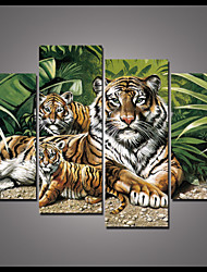 Animal Canvas Print Four Panels Ready to Hang tiger