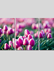Canvas Print Art Set Of 5 Wall Pictures For Linving Room Modern Tulip Flower Pictures Home Decor