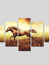 Abstracto / Animal Impressão em tela 5 Painéis Pronto para pendurar,Quadrada
