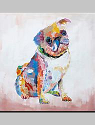 большая картина маслом современные абстрактные животных собаки ручной росписью картины на холсте с растянутыми кадра