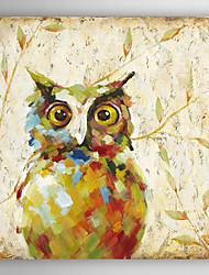 pintados à mão pintura abstrata óleo animal a coruja com quadro esticado