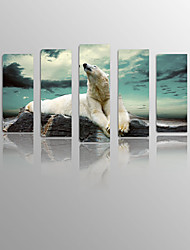 Polar bear Lie Down the Rocks on Canvas Wood Framed 5 Panels Ready to hang for Living Decor